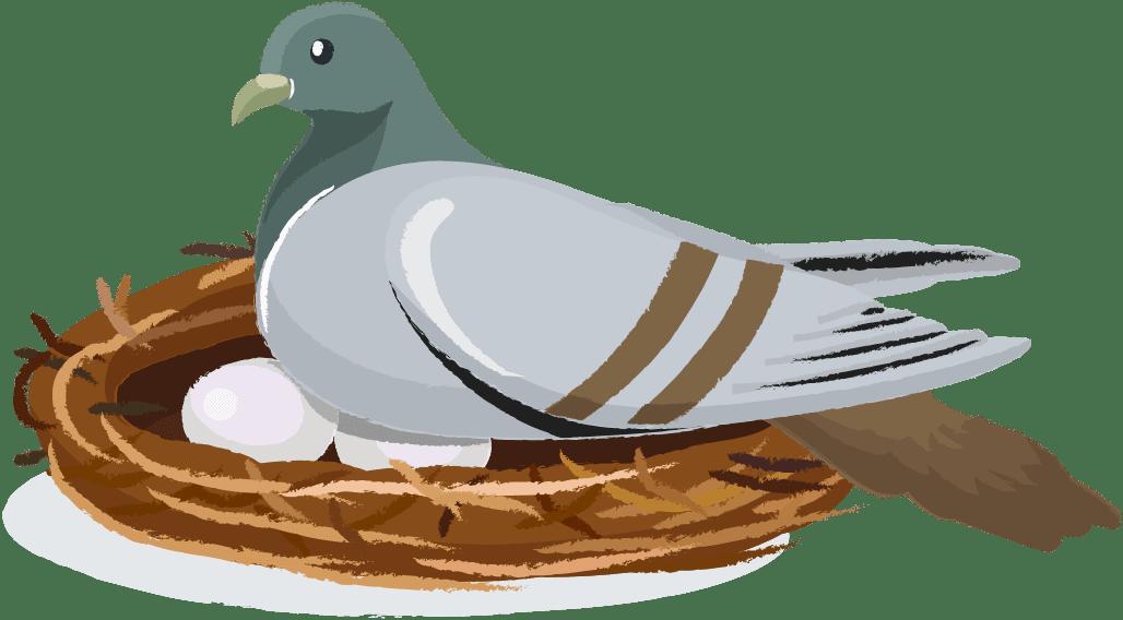 404-pigeon